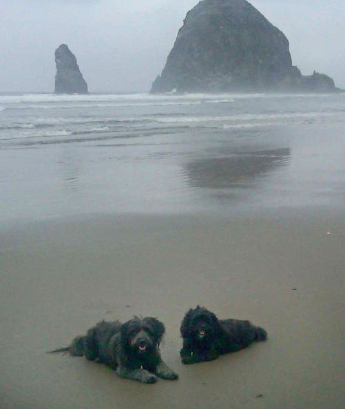 Terriers at Cannon Beach Haystack Rock